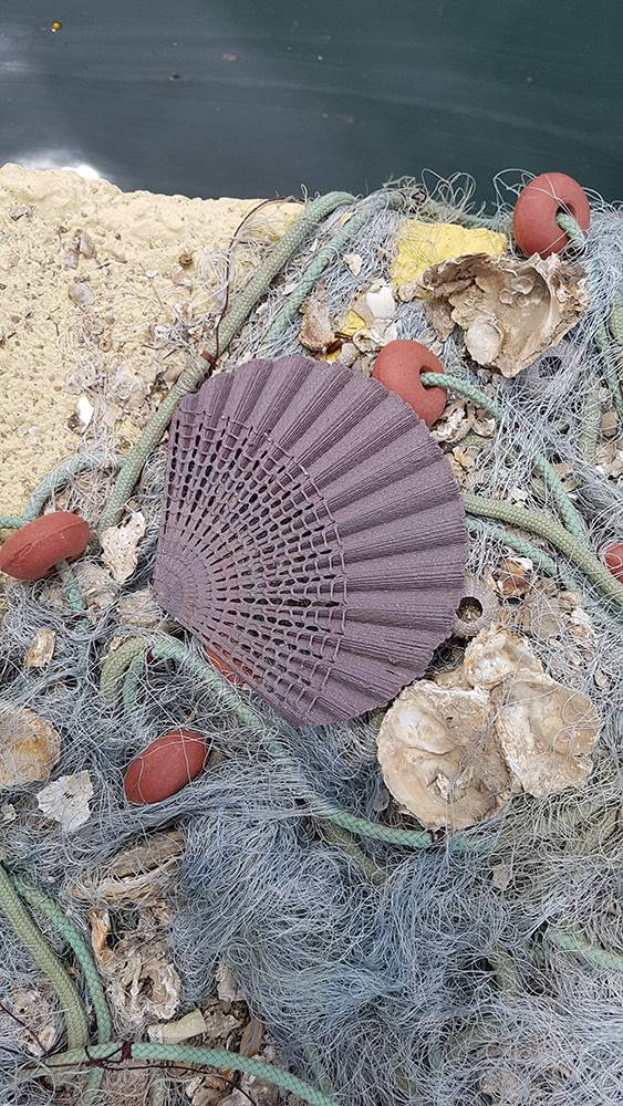 2 The New Raw Second Nature seashell Pecten Jacobeaus ©The New Raw. Second Nature, The New Raw