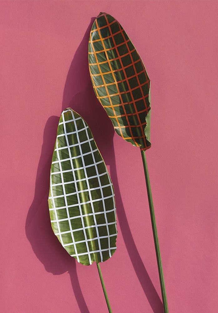 sarah illenberger wonderplants