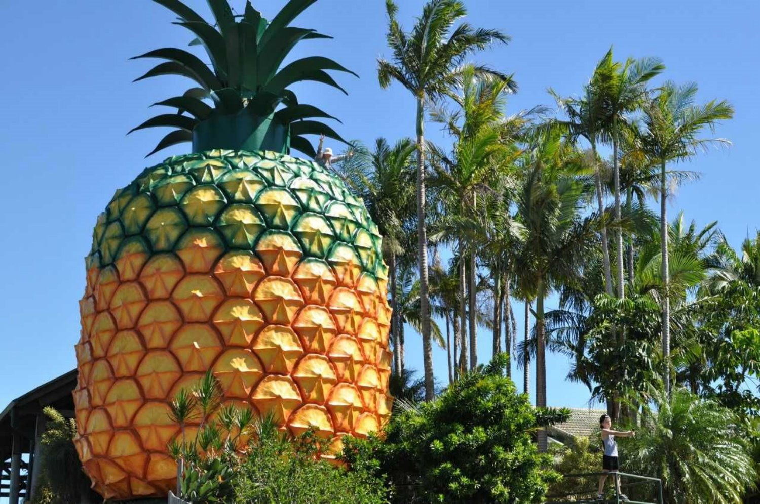 Big Pineapple en Australia de Peddle Thorp and Harvey, Paul Luff y Gary Smallcombe and Associates