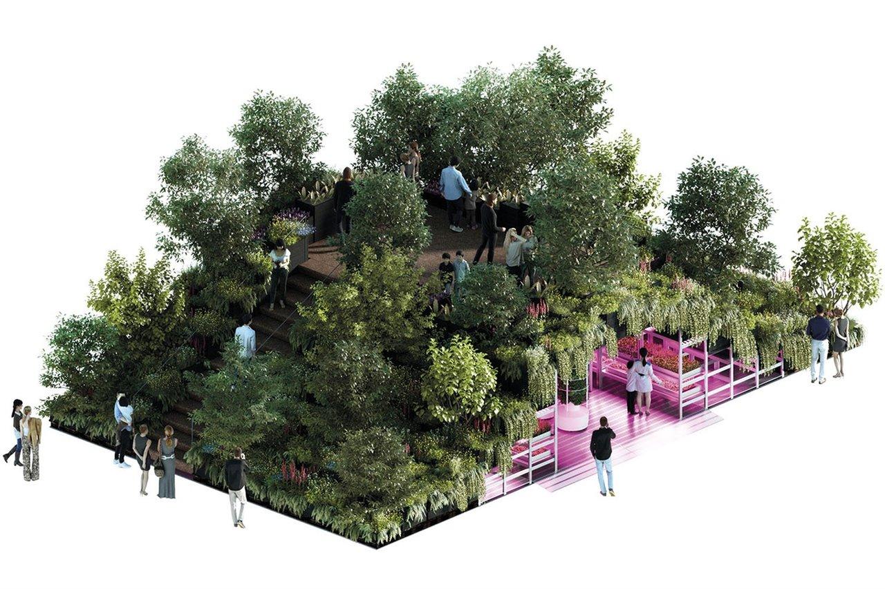Planta un huerto en tu casa, es bueno para tu salud y la de la ciudad